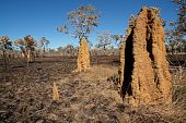 Cathedral Termite Mounds, Australia