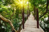 stock photo of jungle exotic  - Tropical exotic travel concept  - JPG