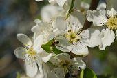 white tree blossom flowers