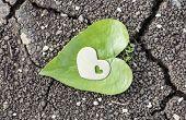 Golden Heart On Heart Shaped Leaf On Dry Soil