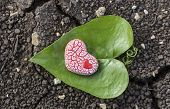 Red Speckled Heart On Heart Shaped Leaf On Soil