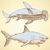 Sketch Scary Sharks In Vintage Style