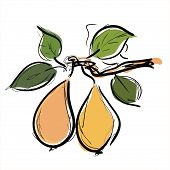 Pears fruit