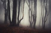 stock photo of spooky  - Haunted dark forest with mysterious fog and twisted spooky trees - JPG