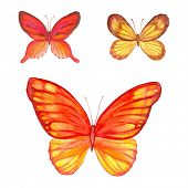 Collection of watercolor butterflies, vector illustration.