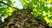 foto of leafy  - Phylum of leafy tree  - JPG