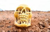 stock photo of morbid  - Abandoned Human Skull in the Rock Desert - JPG