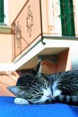 Gato cochilando em Cervo, Itália.