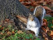 Squirrel posing by tree