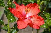 picture of phallic  - Phallic red flower - JPG