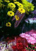 Flower Shop Colors poster
