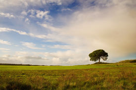 stock photo of dry grass  - a lonely tree in a grass field and a cloudy sky - JPG