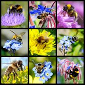 Bees and bumblebees mosaic