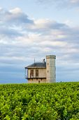 pic of clos  - vineyards of Clos Blanc De Vougeot Castle - JPG