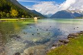 Mallards, Coots swimming in crystal clear lake water of Achensee lake in blue green shade of fresh T poster