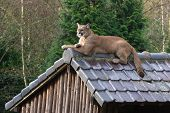 C2Cougar On Roof