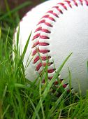 Baseball High Contrast