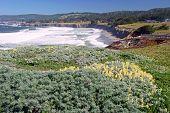 coastline along Sea Ranch, CA