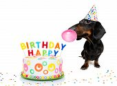 Dachshund Or Sausage  Dog  Hungry For A Happy Birthday Cake With Candles ,wearing  Red Tie And Party poster