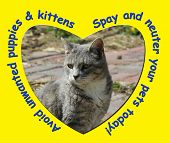 pic of spayed  - Avoid unwanted puppies and kittens - JPG