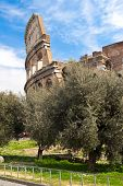 The Coliseum And Olive Trees