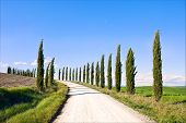 pic of senesi  - Cypress Trees rows and a white road typical landscape in Crete Senesi land near Siena Tuscany Italy Europe - JPG