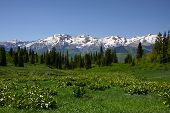 picture of rocky-mountains  - Rocky Mountains in the spring showing trees and snow capped mountains - JPG