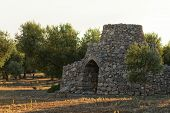 Beautiful Trullo With Olive Grove, Manduria, Southen Italy. View Of Conical Roof Of Traditional Dry  poster