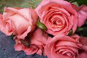 Pink Tender Flower. Flower In Garden At Sunny Summer Or Spring Day. Flower For Postcard Beauty Decor poster