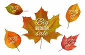 Autumn Sale. Fall Leaves Banners. Realistic Vector Autumn Leaf With Sale Prices. Yellow And Red Foli poster