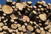 Cut Timber Logs