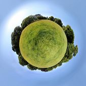 Little planet - meadow in a summer park