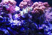Colorful Corals Live Underwater At Bottom Of Ocean. Aquarium Bottom Decoration poster