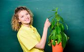 Botany Is About Plants Flowers And Herbs. Take Good Care Plants. Girl Hold Plant In Pot. Plants That poster