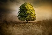 Lonely Tree In Unreal Surreal Environment Garbage Nature Pollution Ecology poster