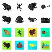 Vector Illustration Of Wildlife And Bog Logo. Collection Of Wildlife And Reptile Vector Icon For Sto poster
