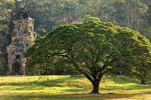Large tree and Prasat Suor Prat temple, Angkor Thom, cambodia