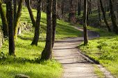 picture of street-walker  - dirt road and walk through the forest landscape with old trees - JPG