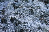Verdes de Inverno