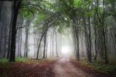 Road trough a beautiful forest with fog in summer