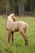foto of fillies  - cute beautiful pony filly in a green meadow with blue sky background - JPG