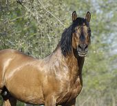 Portrait Of The Beautiful Roan Horse