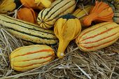 striped and winged gourds on hay
