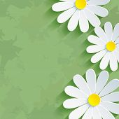 Vintage Floral Green Background With Flower Chamomile