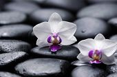 Two white orchid with therapy stones