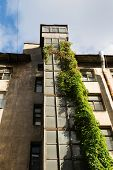 Closed-old Elevator Shaft With Curly Green Ivy