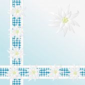Not a vector. Decorative Checkered Pattern With Edelweiss As Background