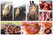 picture of loin cloth  - all stages of process whith passes meat from the slaughter to tasty fresh dish - JPG