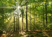 stock photo of wild adventure  - Beautiful sunbeams in magic beach forest  - JPG