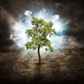 stock photo of impossible  - A tree is alone in the woods with on a dry landscape against clouds in the sky for a hope dream or nature concept - JPG